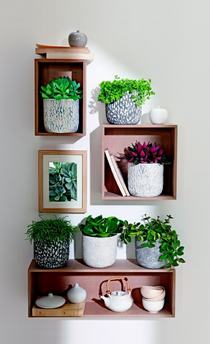 houseplant display (9)