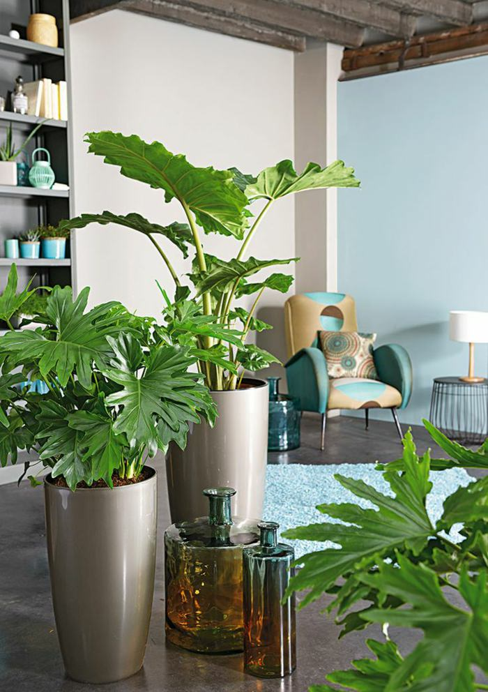 houseplant display ideas (4)