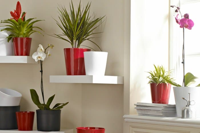 houseplants display ideas (1)