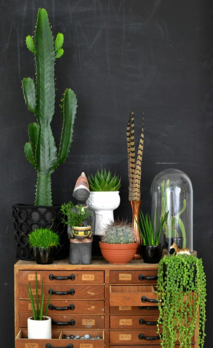houseplants display ideas (3)
