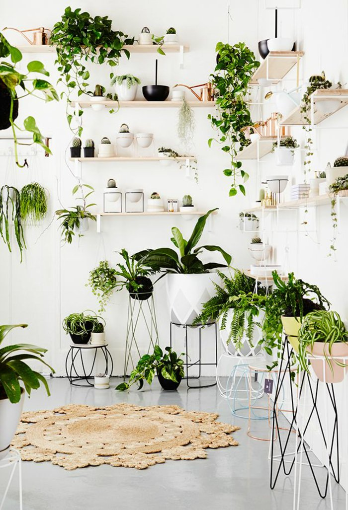 Houseplants Display Ideas 5