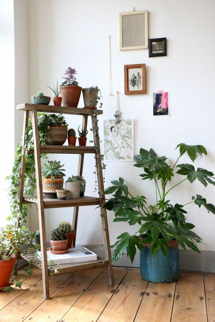 houseplants display ideas (6)