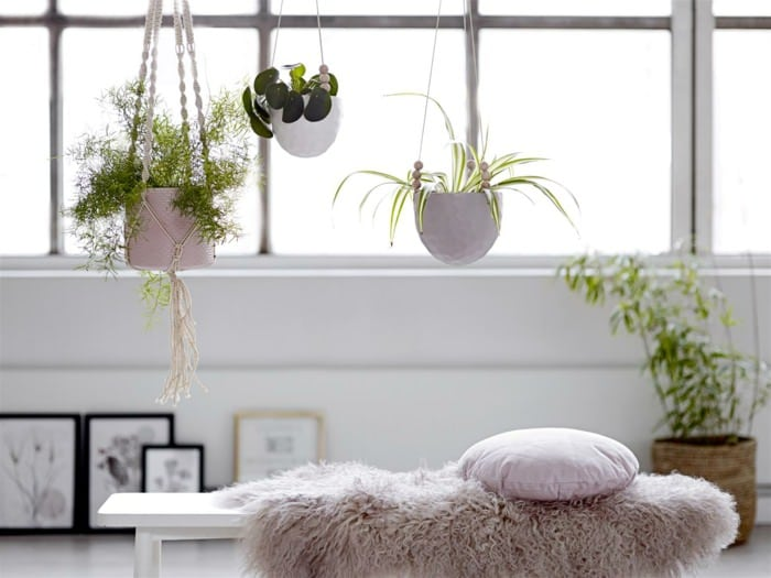 houseplants display ideas (8)