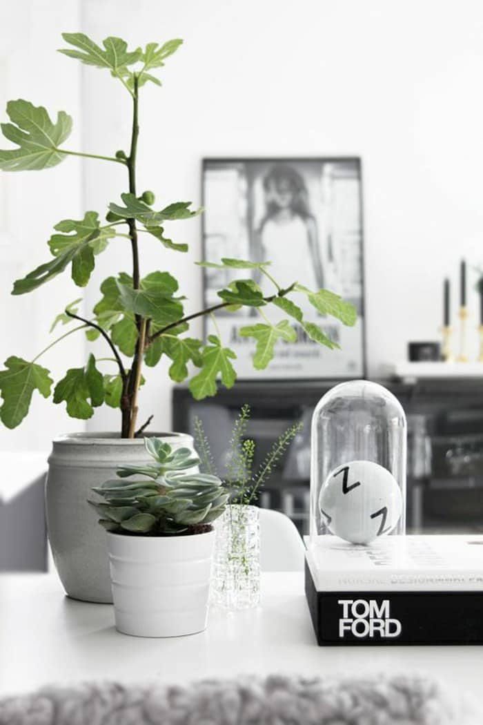houseplants ideas (4)