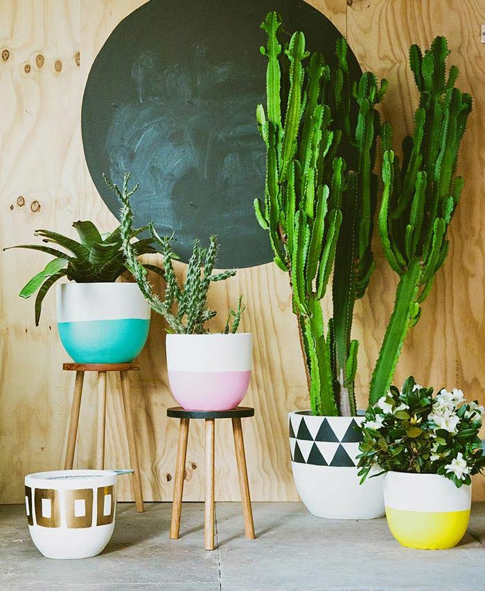 houseplants ideas (5)