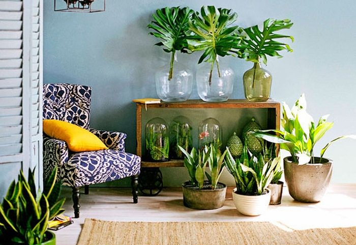 Indoor Plants Display Ideas