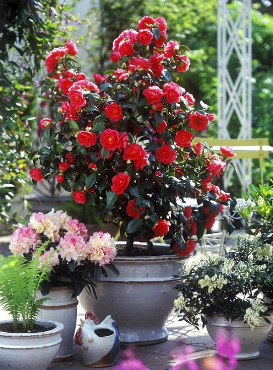 Balcony Garden Web & 44 Best Shrubs for Containers | Best Container Gardening ...