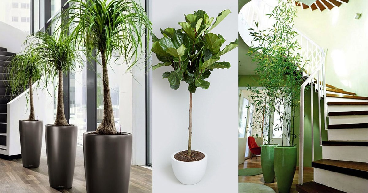 Merveilleux 18 Best Large Indoor Plants | Tall Houseplants For Home And Offices |  Balcony Garden Web