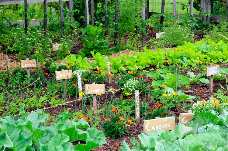 Secrets Of A High Yield Gardening
