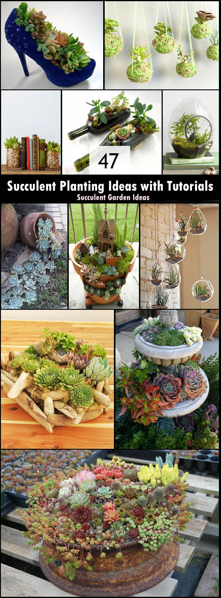 47 Succulent Planting Ideas With Tutorials Succulent Garden Ideas Balcony Garden Web