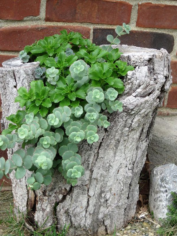 diy tree stump planter (2)