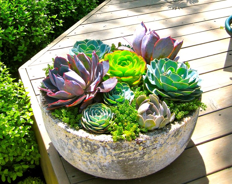 plantes-succulentes-constellation-petit-pot-fleur