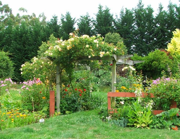 best pergola plants - 19 Best Pergola Plants Climbing Plants For Pergolas And Arbors