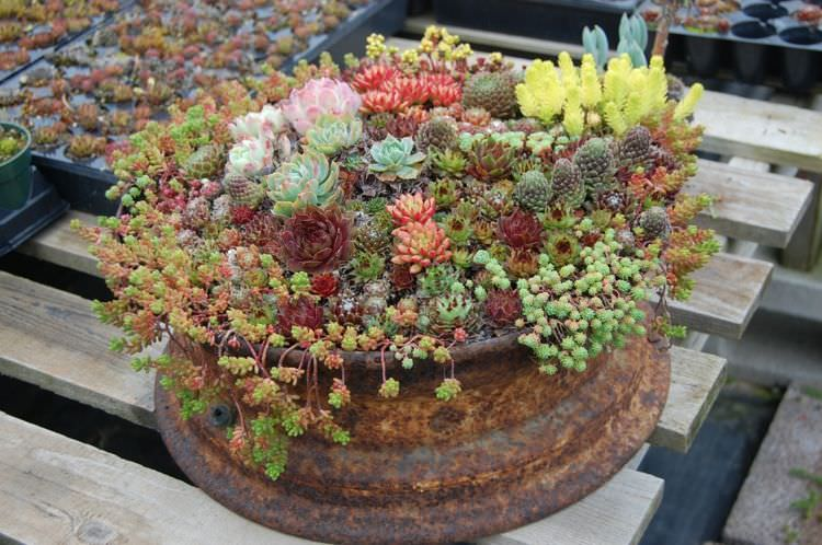 47 Succulent Planting Ideas With Tutorials