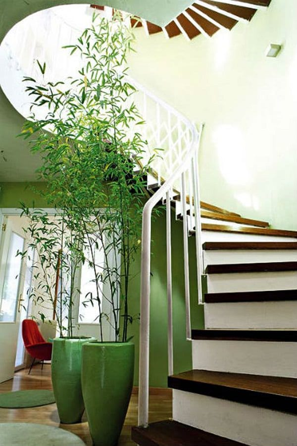 tall bamboo houseplant
