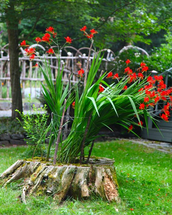 tree stump planter ideas (10)