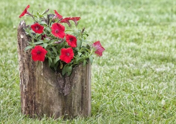 tree stump planter ideas (11)