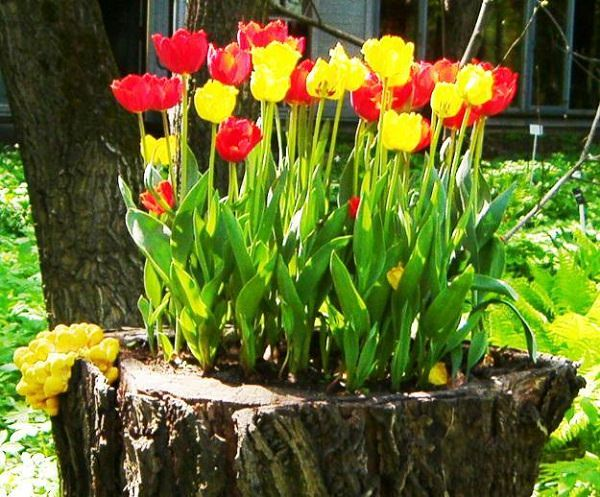 tree stump planter ideas (14)