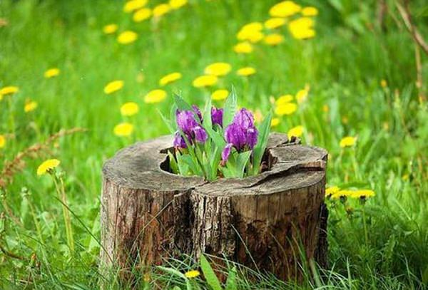tree stump planter ideas (15)