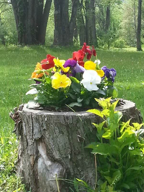 Image result for wooden stump planters