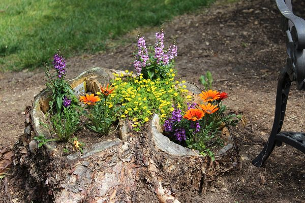 tree stump planter ideas (6)