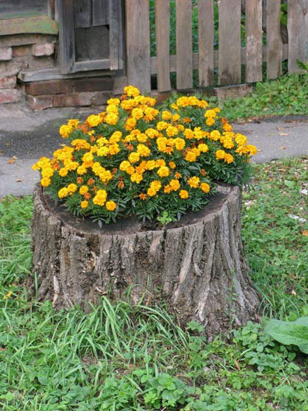 tree stump planter ideas (7)