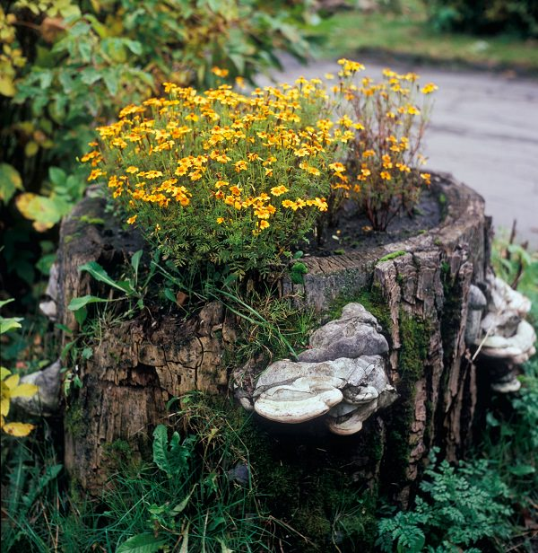 tree stump planter ideas (9)