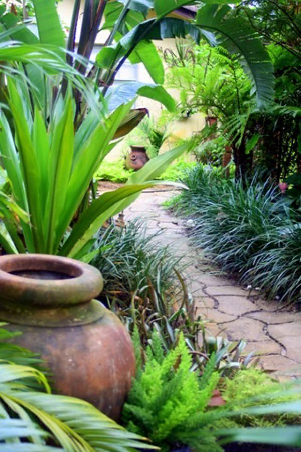 Beautiful backyard walkway with Heliconias, Banana Plants, Bird of  Paradise, and lust tropical - 14 Cold Hardy Tropical Plants To Create A Tropical Garden In Cold
