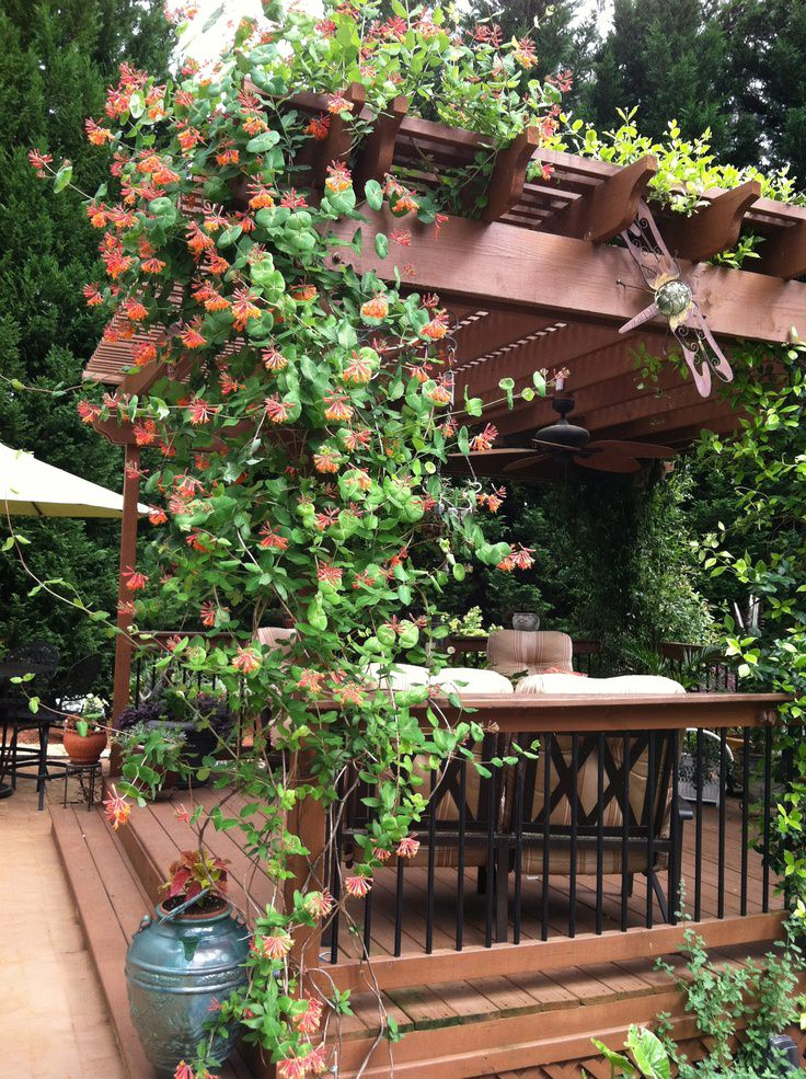Best Plants for Pergola