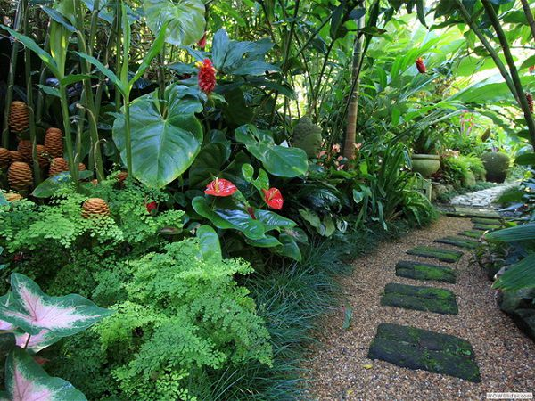 tropical landscape design - 14 Cold Hardy Tropical Plants To Create A Tropical Garden In Cold