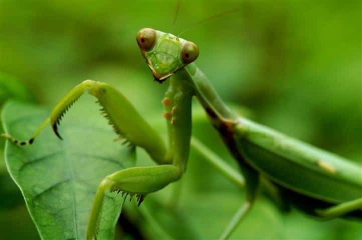 10 most beneficial garden insects you should avoid killing useful