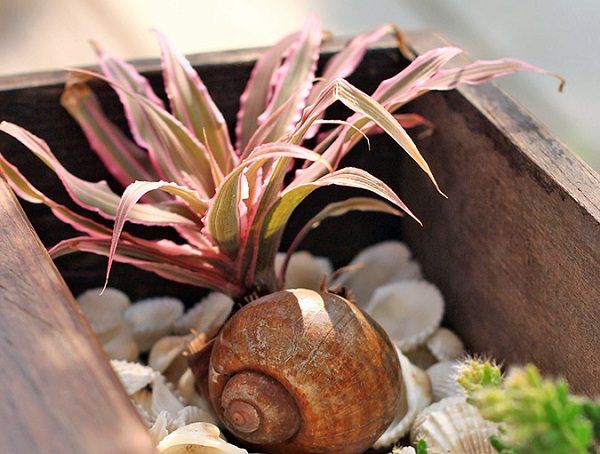 airplant in seashell