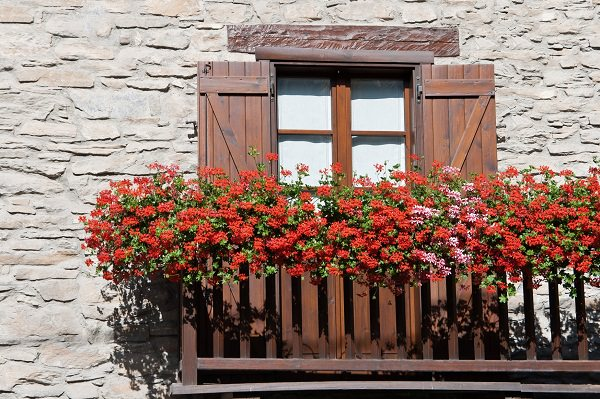 beautiful flowering balcony garden
