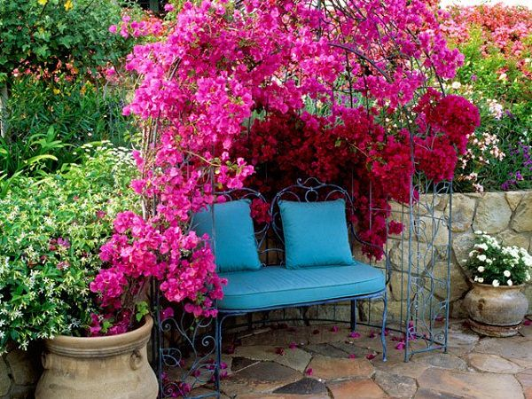 19 best pergola plants climbing plants for pergolas and arbors the climbing varieties of bougainvillea are suitable for the pergolas this plant loves the sunny position and does not like wet feet mightylinksfo