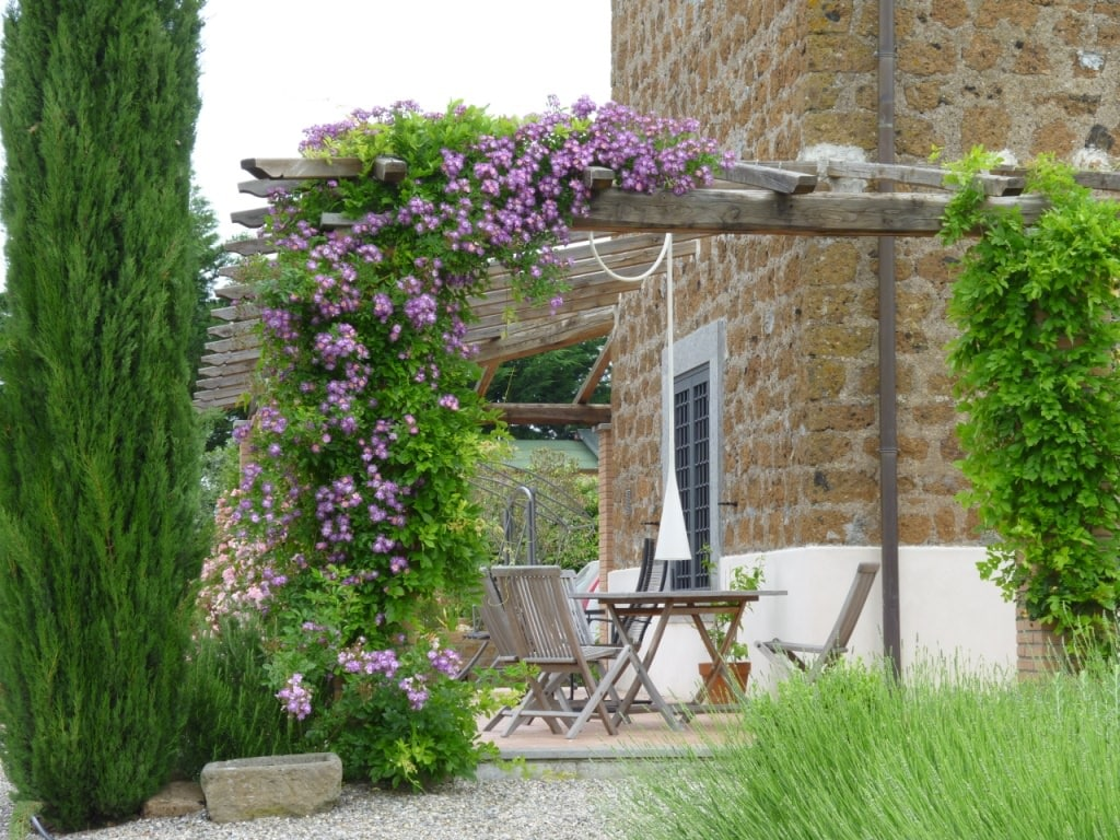 climbing plants for arbors - 19 Best Pergola Plants Climbing Plants For Pergolas And Arbors