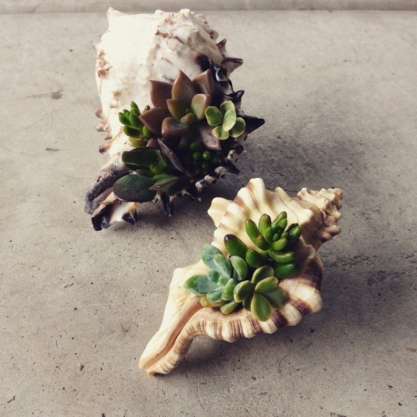 conch shell planter