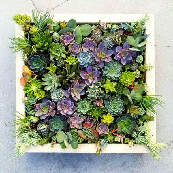 Vertical Succulent Wall Planter In Quick Easy Steps Diy Succulent