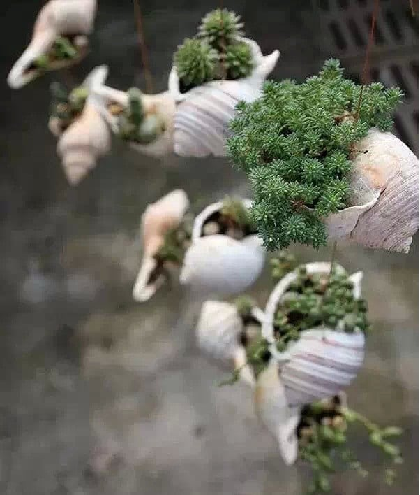 hanging shell planter 1
