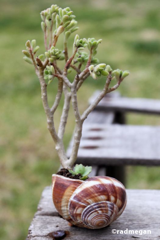 sea shell planter