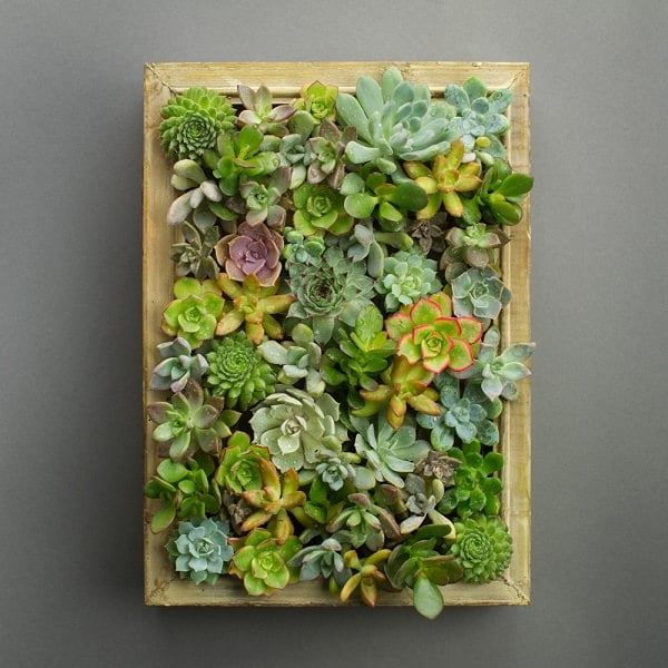 Succulent Living Picture Frame
