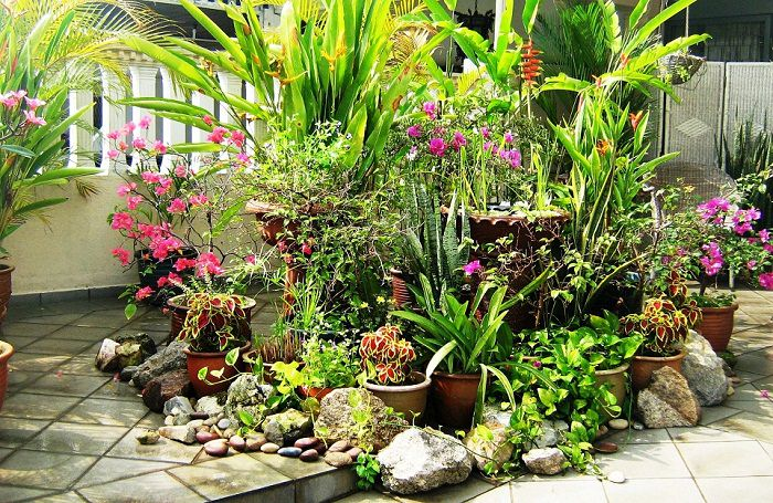 container garden design tips-tropical style