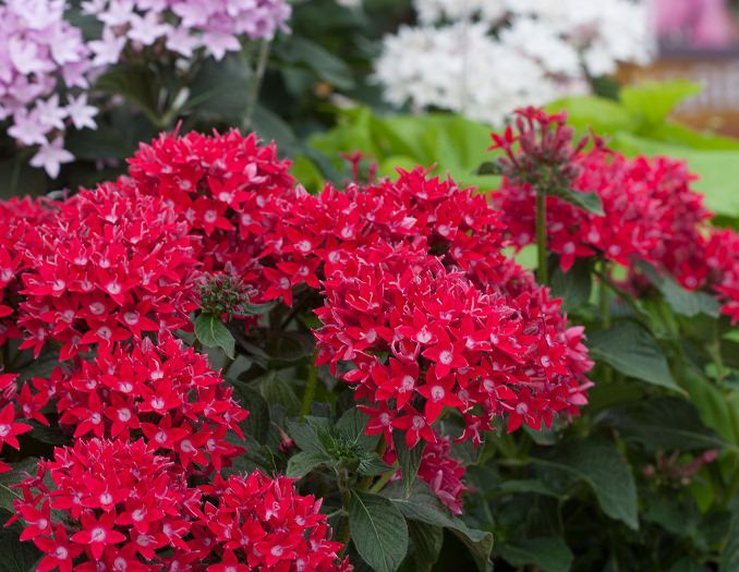 heat tolerant flowers