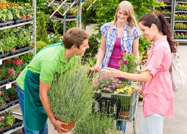 Tips for buying plants from garden center (2)