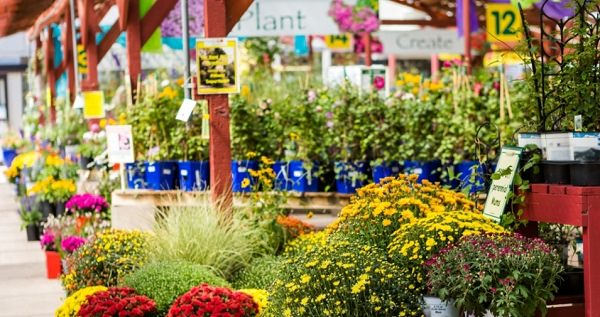 Tips For Ing Plants From Garden Center 6