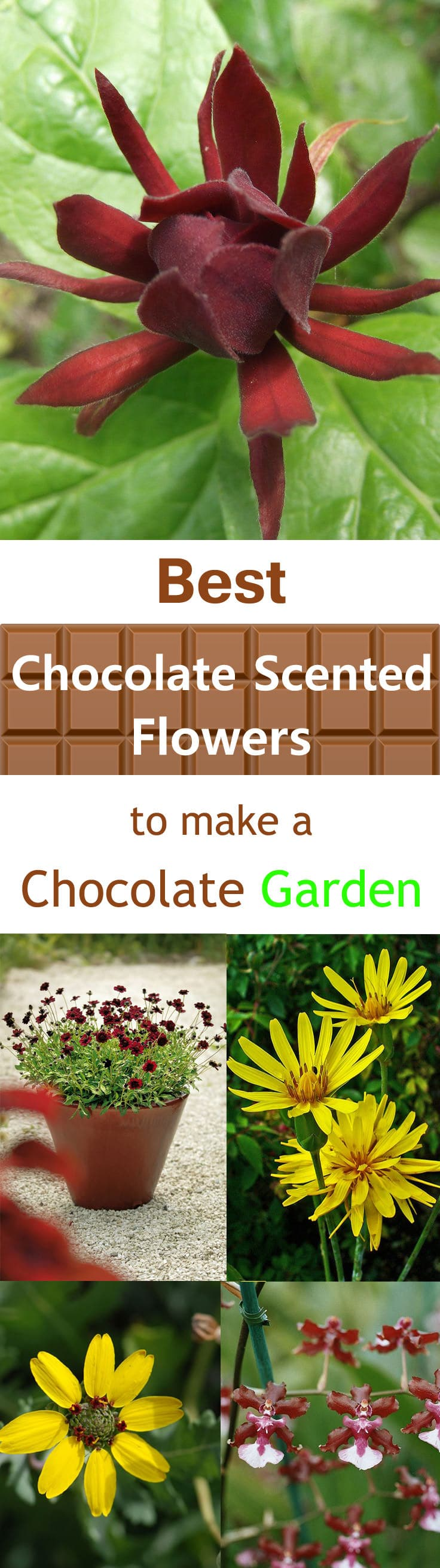 If you love chocolates grow chocolate scented flowers, check out this list of plants and flowers to get an idea.