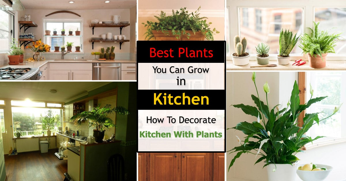 Best Kitchen Plants Plants For Kitchen To Decorate It Balcony Garden Web