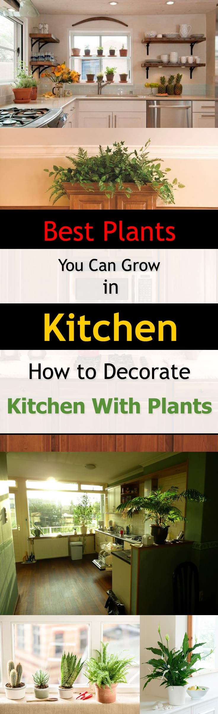 Make your kitchen look more fresh and inviting than ever before. See the best kitchen plants you can grow in your kitchen to decorate it.