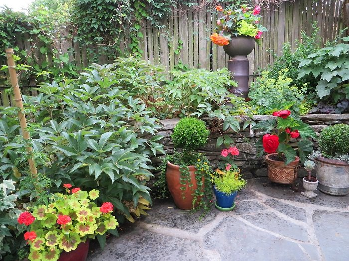 container plants arranged according to height-designing a container garden