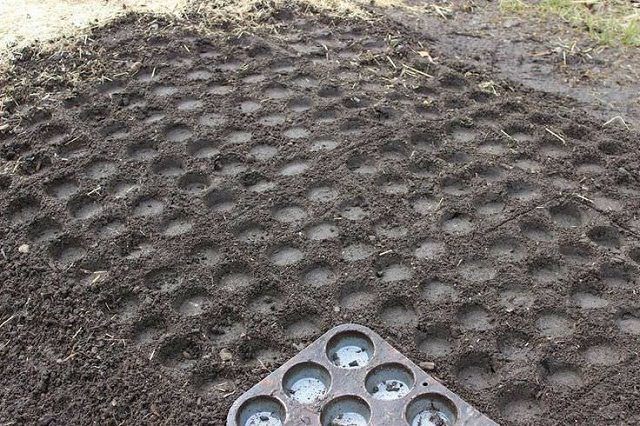 great ideas for the garden (1)