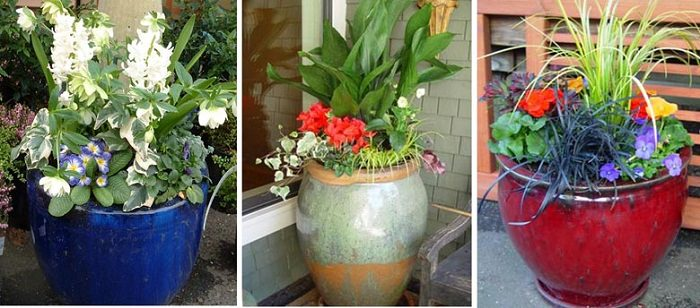 plant arrangements for pots